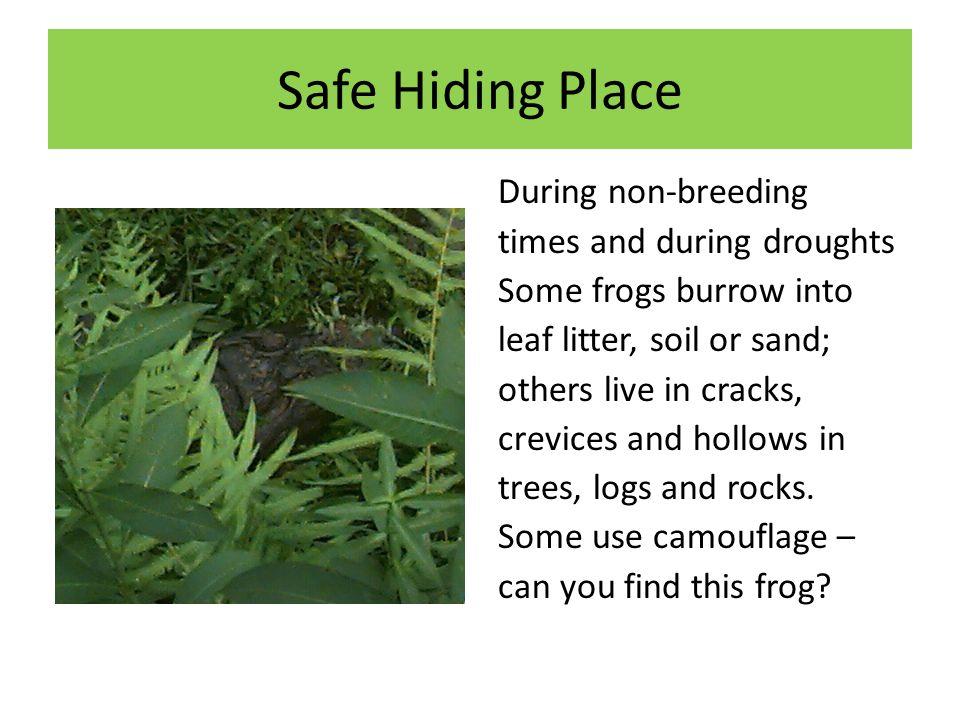 Safe Hiding Place