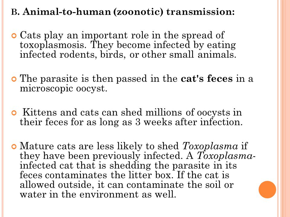 B. Animal-to-human (zoonotic) transmission: