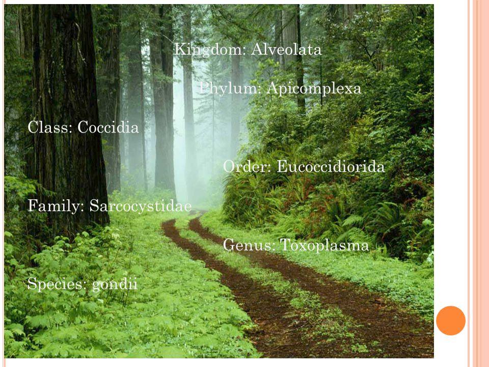 Kingdom: Alveolata Phylum: Apicomplexa. Class: Coccidia. Order: Eucoccidiorida. Family: Sarcocystidae.