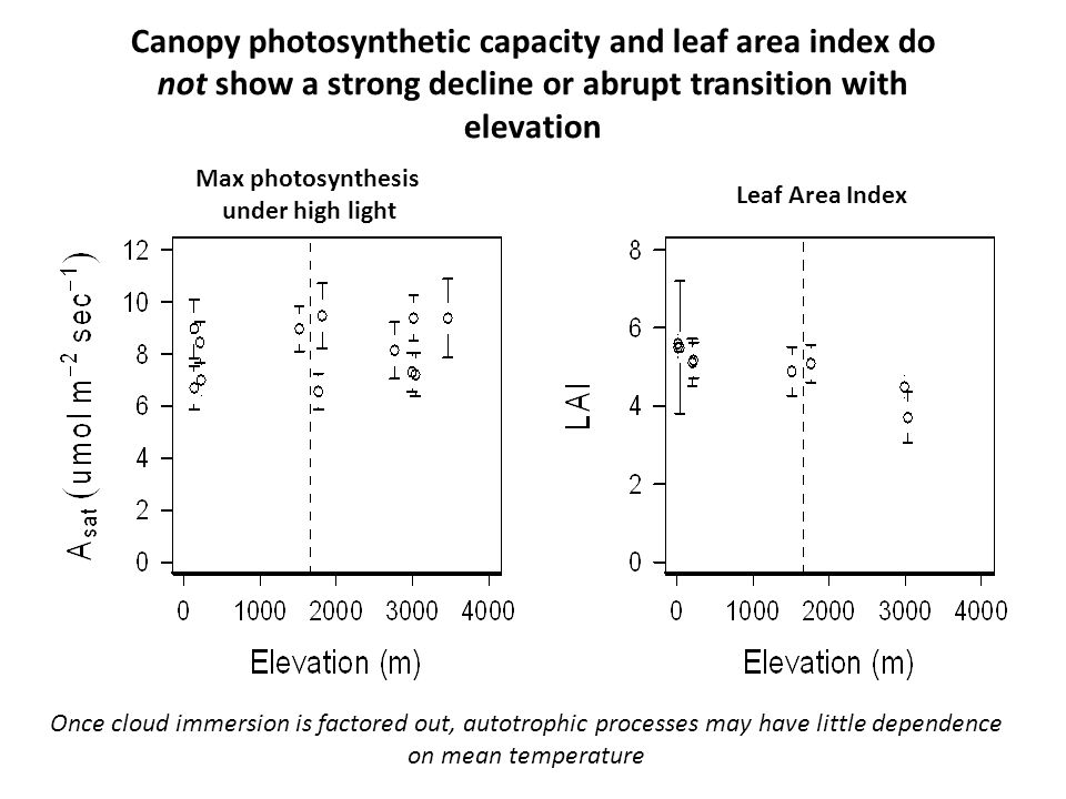 Canopy photosynthetic capacity and leaf area index do