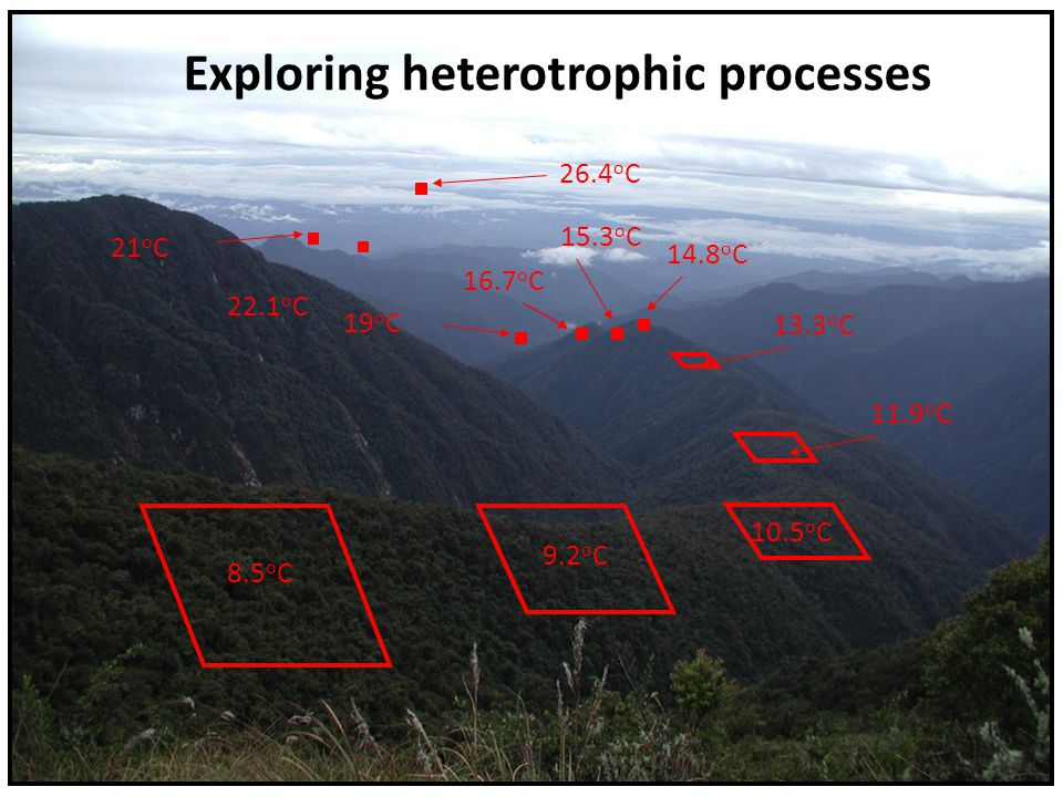 Exploring heterotrophic processes