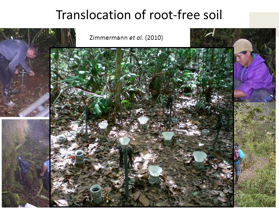 Translocation of root-free soil