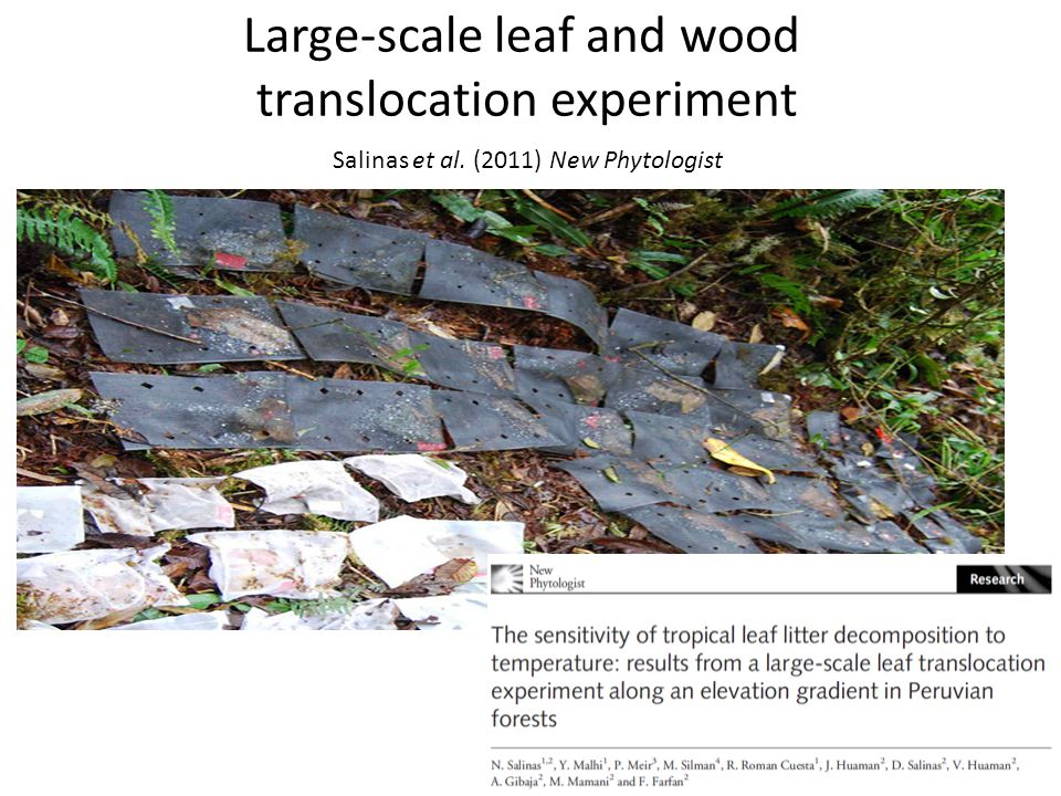 Large-scale leaf and wood translocation experiment