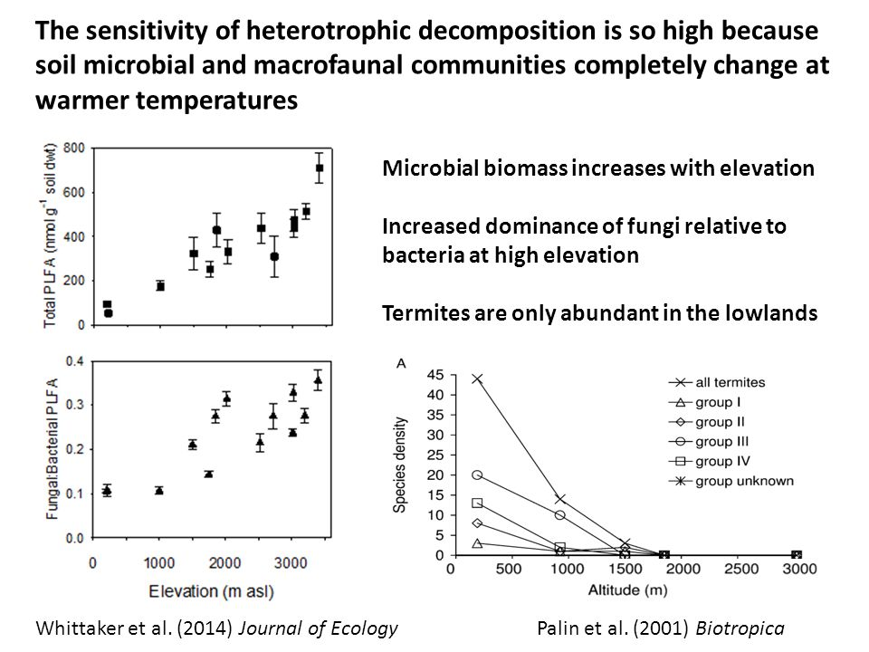 The sensitivity of heterotrophic decomposition is so high because