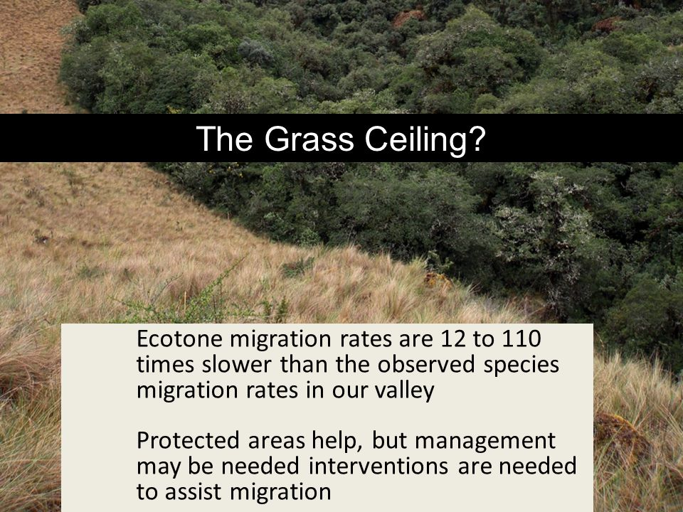The Grass Ceiling Ecotone migration rates are 12 to 110 times slower than the observed species migration rates in our valley.
