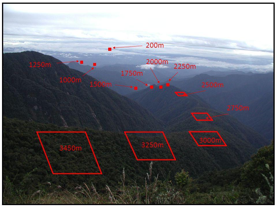 200m 2000m 1250m 2250m 1750m 1000m 1500m 2500m 2750m Show transect of plots 3000m 3250m 3450m