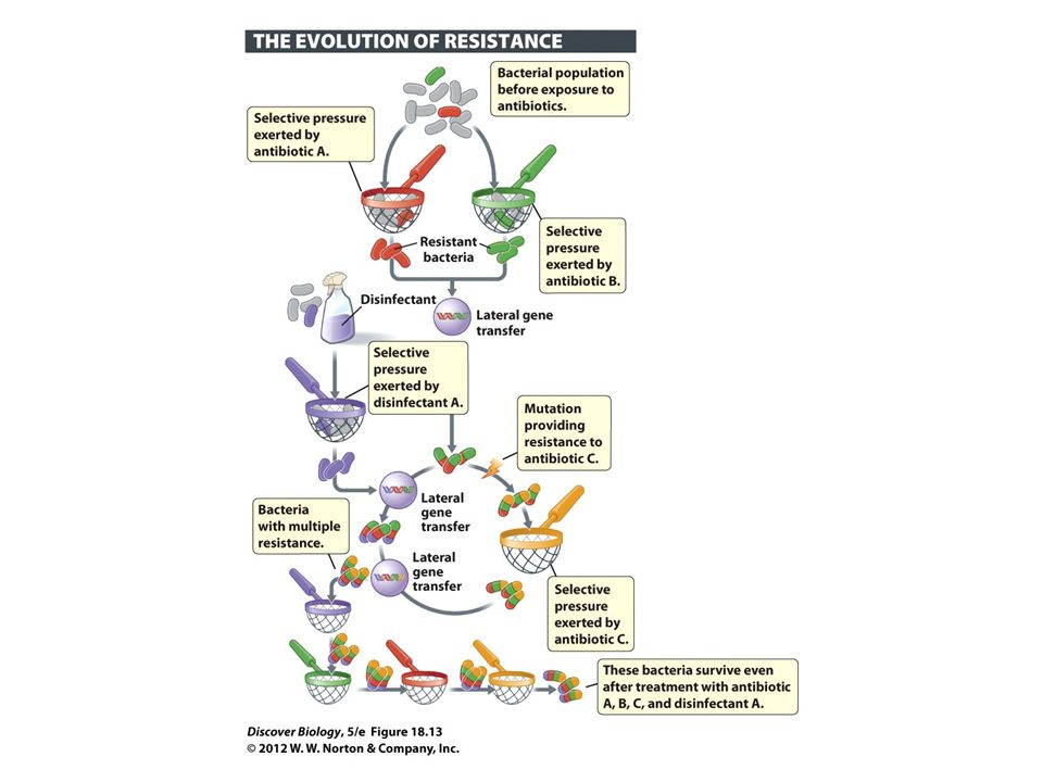 Figure 18.13 Natural Selection Results in Resistance to Antibiotics