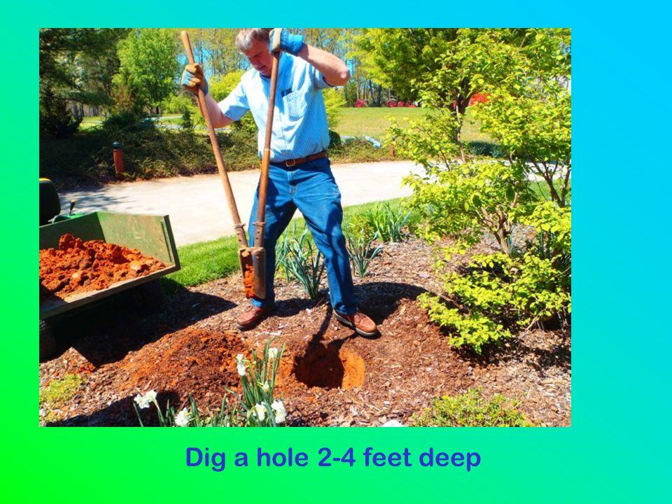 Dig a hole 2-4 feet deep
