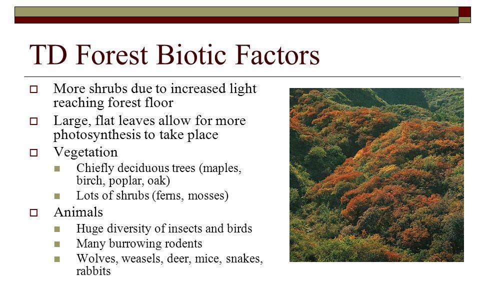 TD Forest Biotic Factors