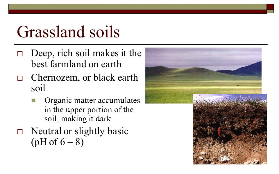 Grassland soils Deep, rich soil makes it the best farmland on earth