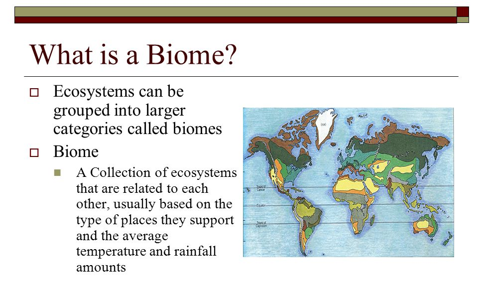 What is a Biome Ecosystems can be grouped into larger categories called biomes. Biome.