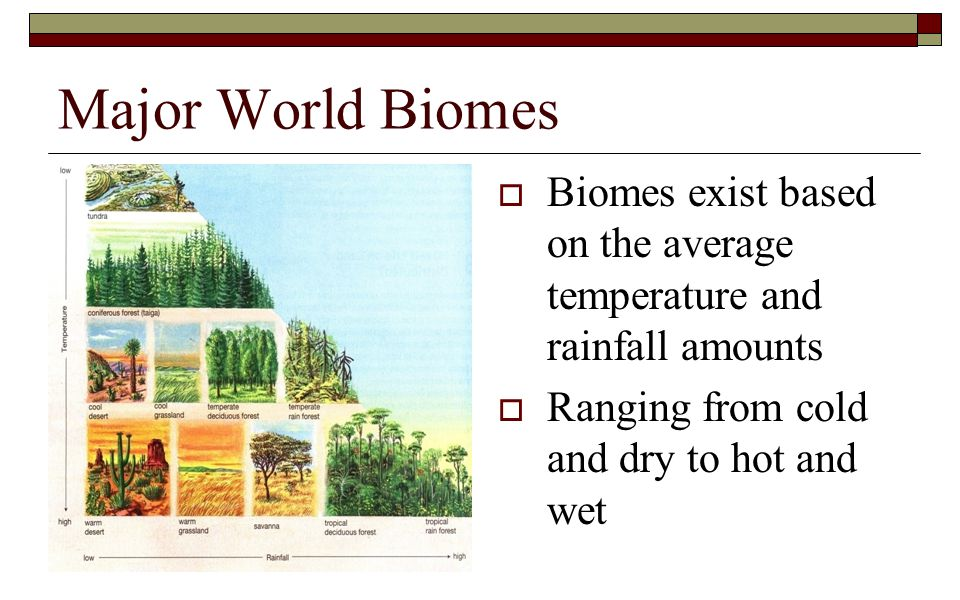 Major World Biomes Biomes exist based on the average temperature and rainfall amounts.
