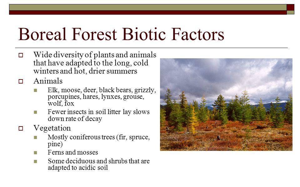 Boreal Forest Biotic Factors
