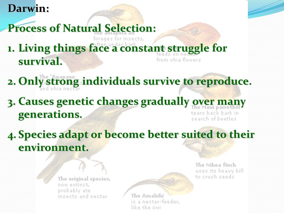 Darwin: Process of Natural Selection: Living things face a constant struggle for survival. Only strong individuals survive to reproduce.