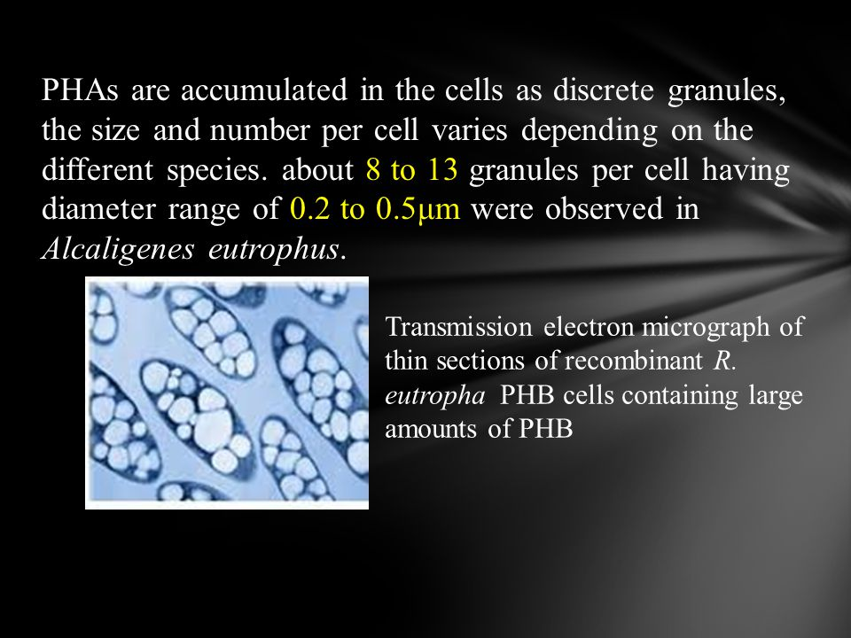 PHAs are accumulated in the cells as discrete granules, the size and number per cell varies depending on the different species. about 8 to 13 granules per cell having diameter range of 0.2 to 0.5μm were observed in Alcaligenes eutrophus.