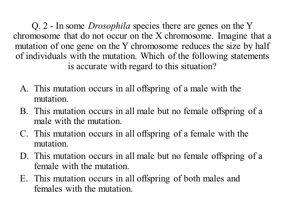 Q. 2 - In some Drosophila species there are genes on the Y chromosome that do not occur on the X chromosome. Imagine that a mutation of one gene on the Y chromosome reduces the size by half of individuals with the mutation. Which of the following statements is accurate with regard to this situation