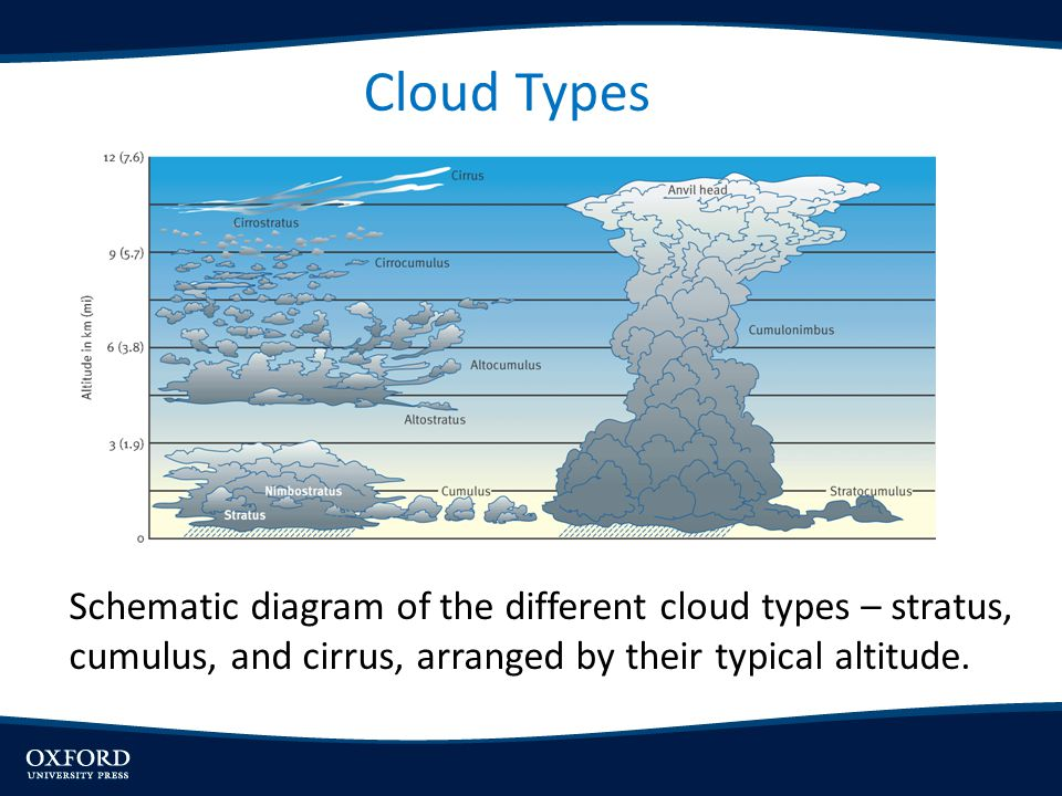 Cloud Types Schematic diagram of the different cloud types – stratus, cumulus, and cirrus, arranged by their typical altitude.