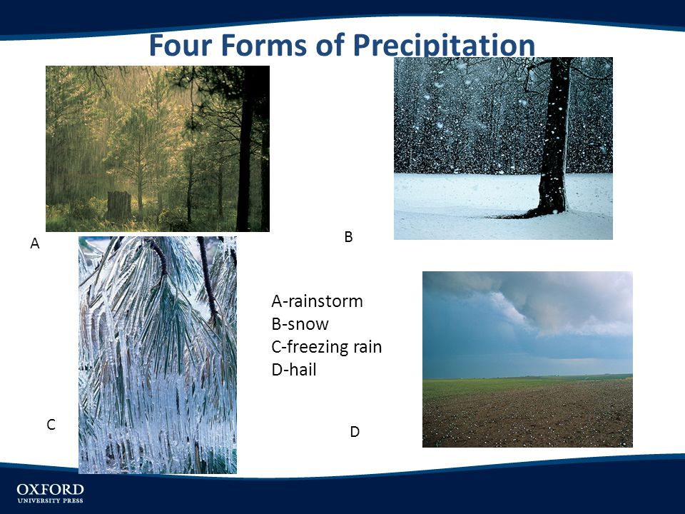 Four Forms of Precipitation