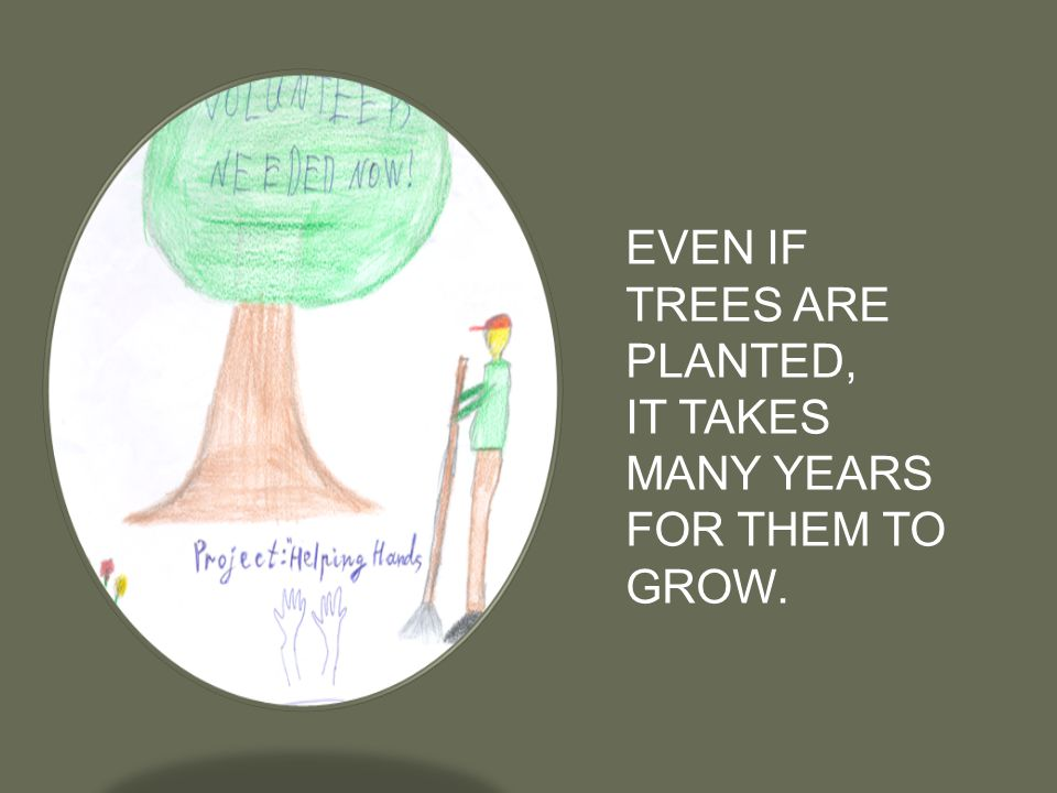 EVEN IF TREES ARE PLANTED, IT TAKES MANY YEARS FOR THEM TO GROW.
