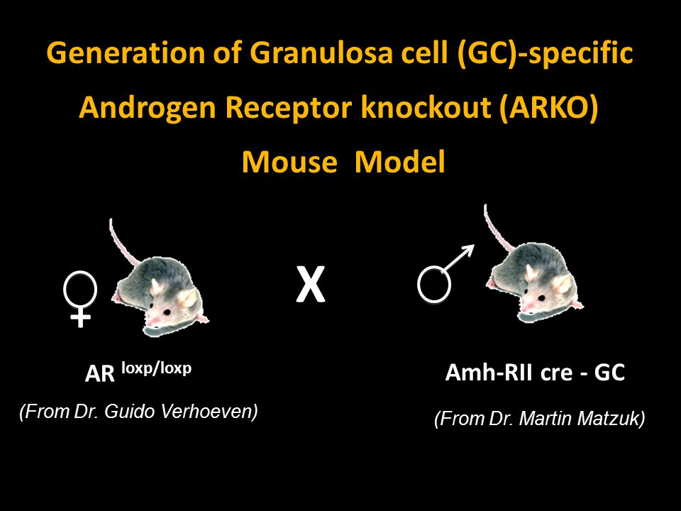 X + Generation of Granulosa cell (GC)-specific