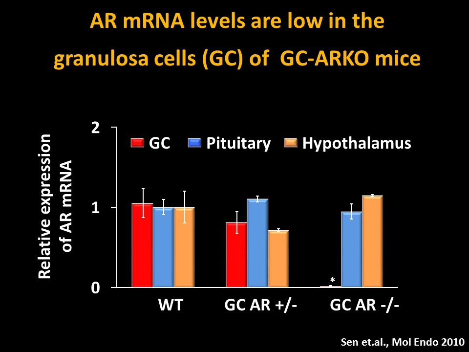 AR mRNA levels are low in the granulosa cells (GC) of GC-ARKO mice