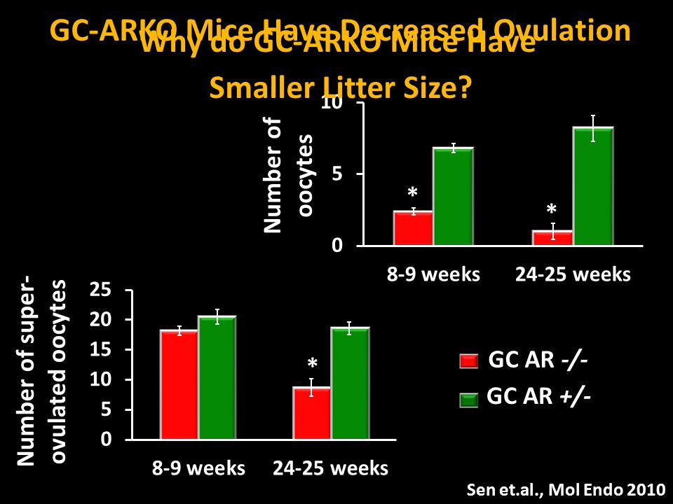 GC-ARKO Mice Have Decreased Ovulation Why do GC-ARKO Mice Have