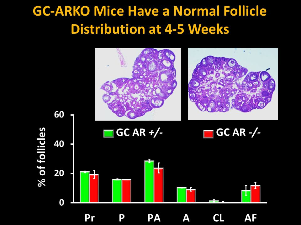 GC-ARKO Mice Have a Normal Follicle Distribution at 4-5 Weeks