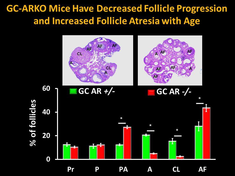 GC-ARKO Mice Have Decreased Follicle Progression and Increased Follicle Atresia with Age