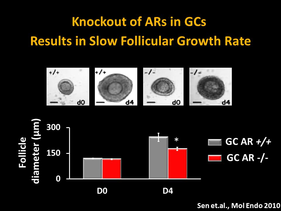 Results in Slow Follicular Growth Rate