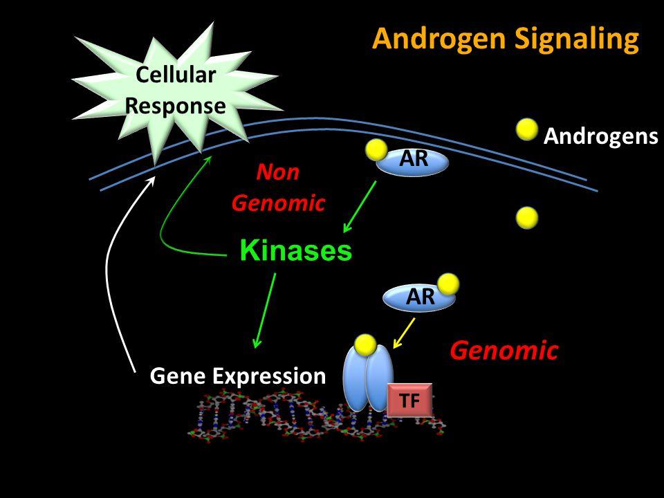 Androgen Signaling Kinases Genomic Cellular Response Androgens AR Non