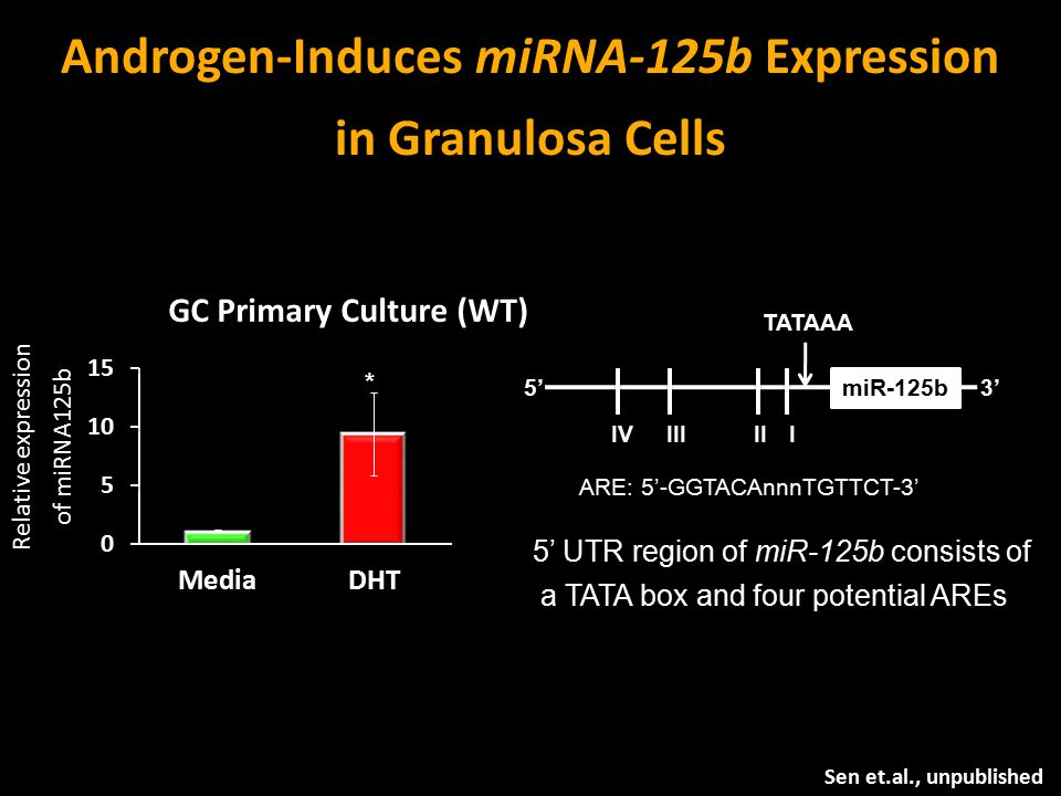 Androgen-Induces miRNA-125b Expression