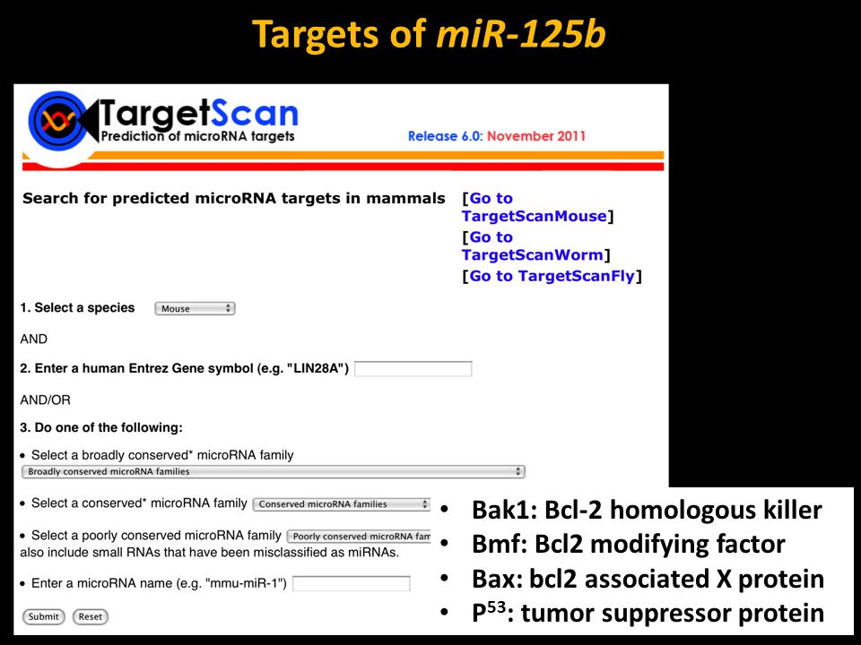 Targets of miR-125b Bak1: Bcl-2 homologous killer