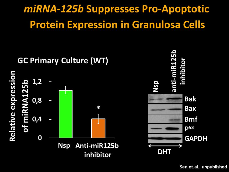 miRNA-125b Suppresses Pro-Apoptotic