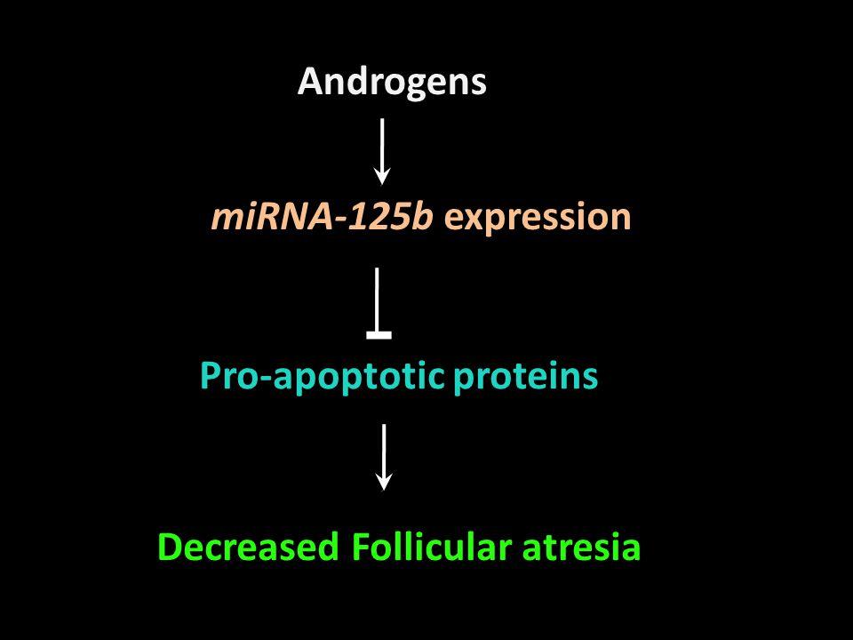 Pro-apoptotic proteins Decreased Follicular atresia