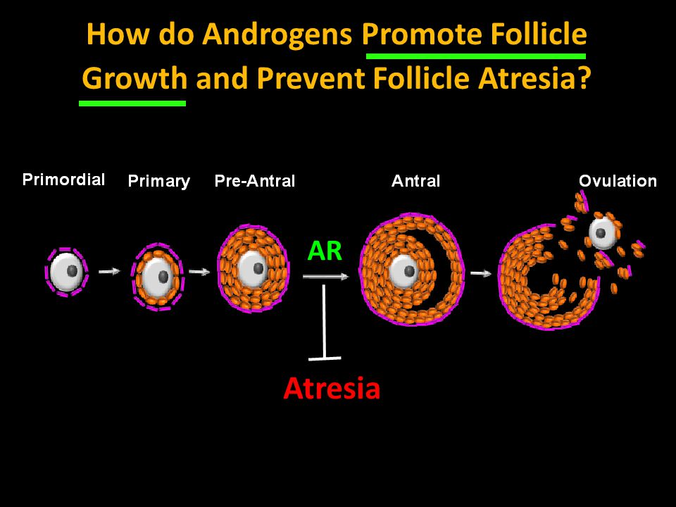 How do Androgens Promote Follicle Growth and Prevent Follicle Atresia