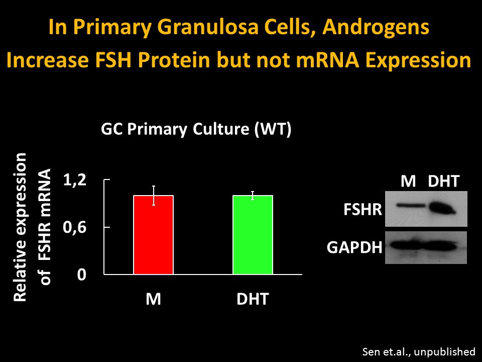 In Primary Granulosa Cells, Androgens
