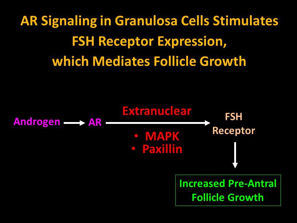 AR Signaling in Granulosa Cells Stimulates FSH Receptor Expression,