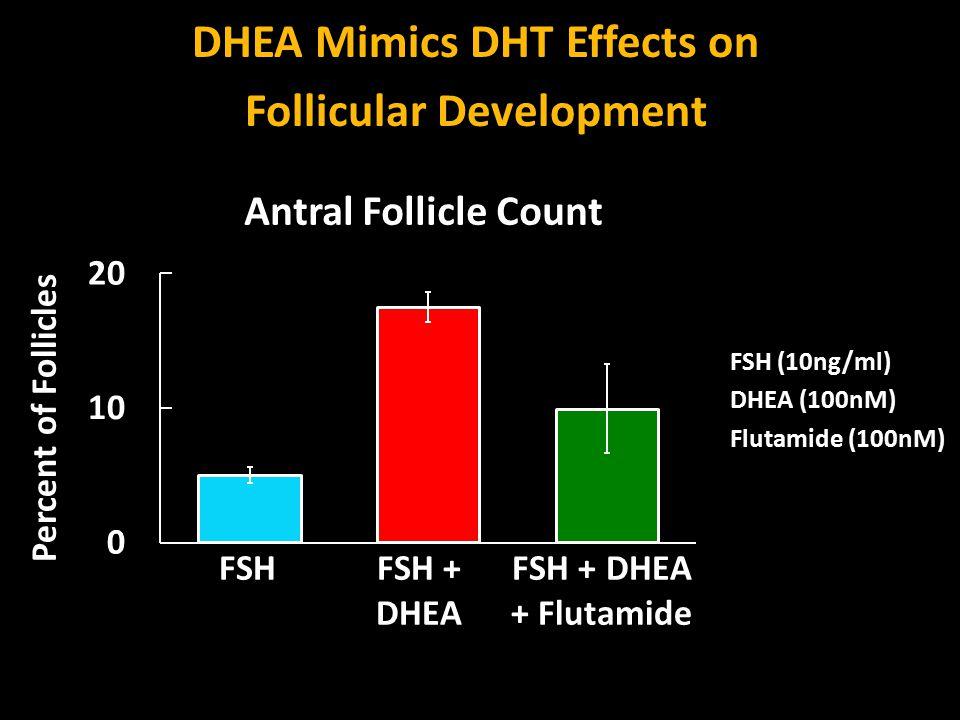DHEA Mimics DHT Effects on Follicular Development