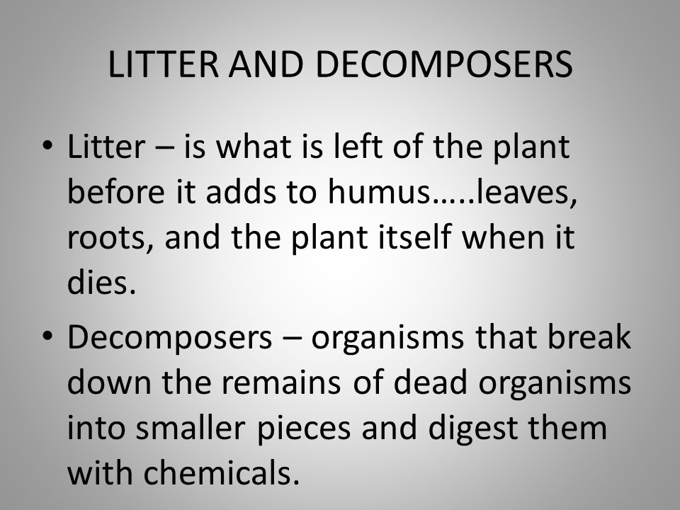 LITTER AND DECOMPOSERS