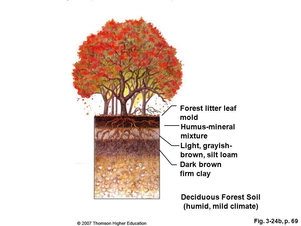 Deciduous Forest Soil (humid, mild climate)