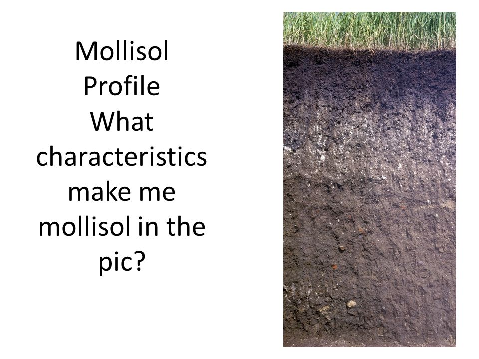 Mollisol Profile What characteristics make me mollisol in the pic