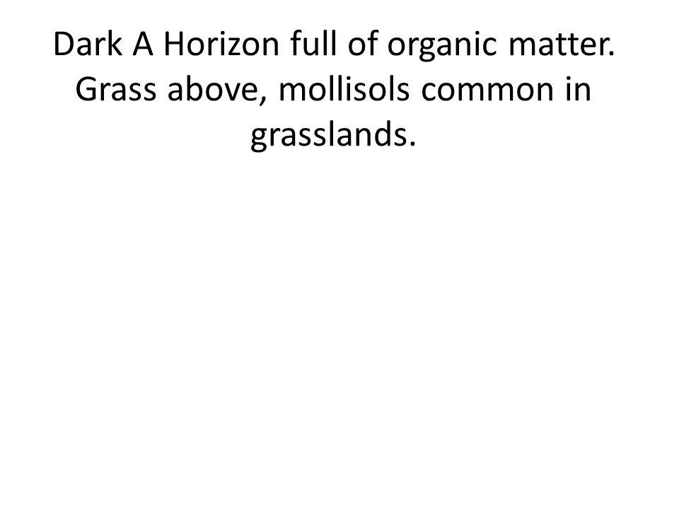 Dark A Horizon full of organic matter