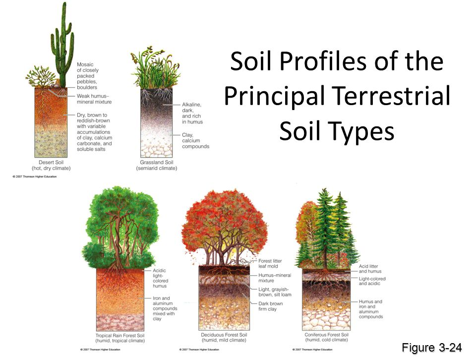 Soil orders here we go ppt download for What is dirt composed of