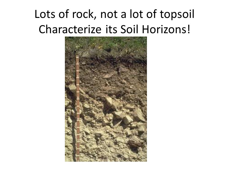 Lots of rock, not a lot of topsoil Characterize its Soil Horizons!
