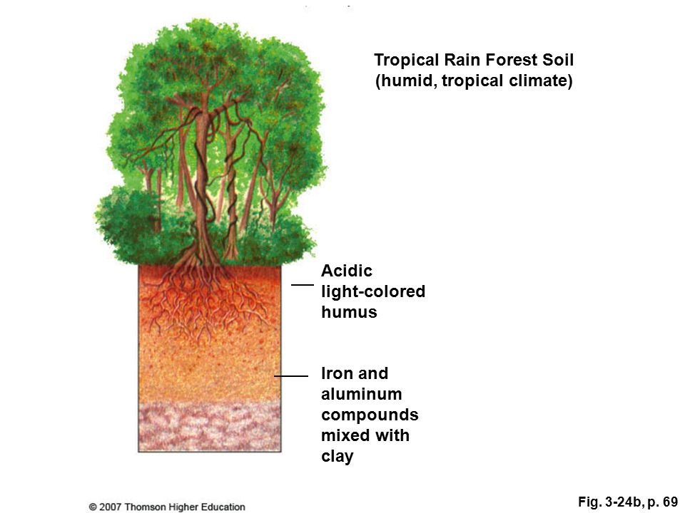 Soil orders here we go ppt download for Soil 4 climate