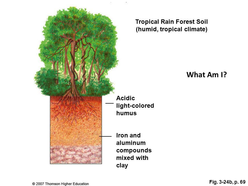 Tropical Rain Forest Soil (humid, tropical climate)