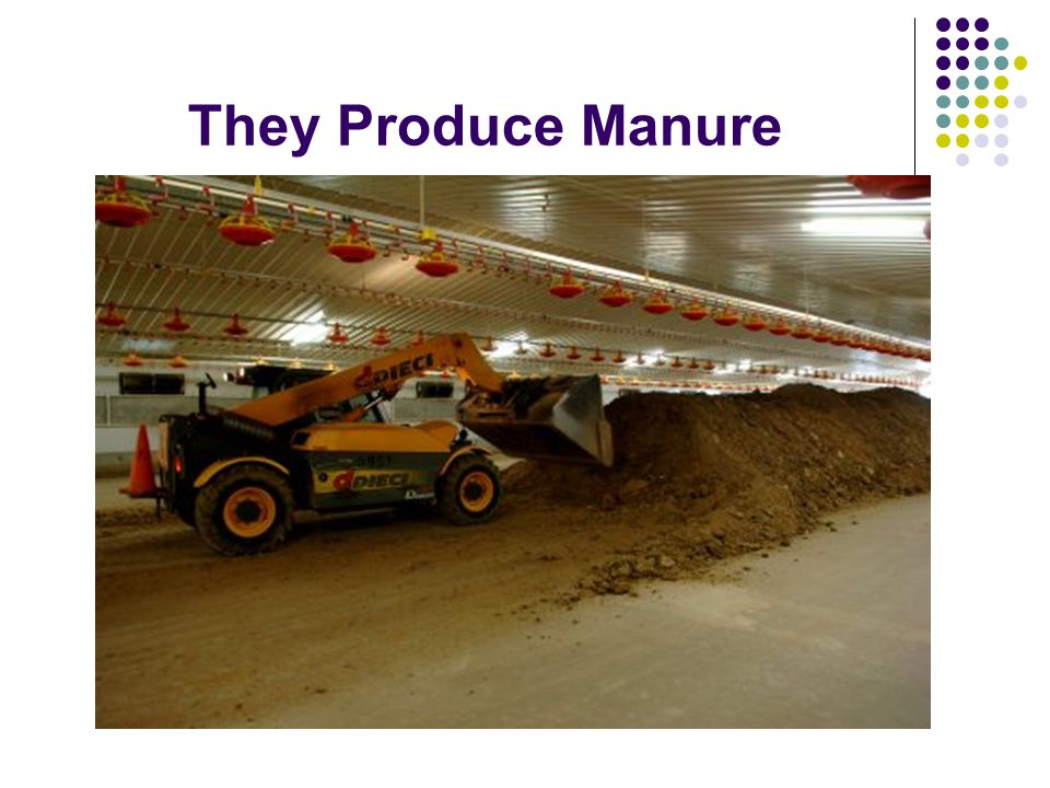 They Produce Manure