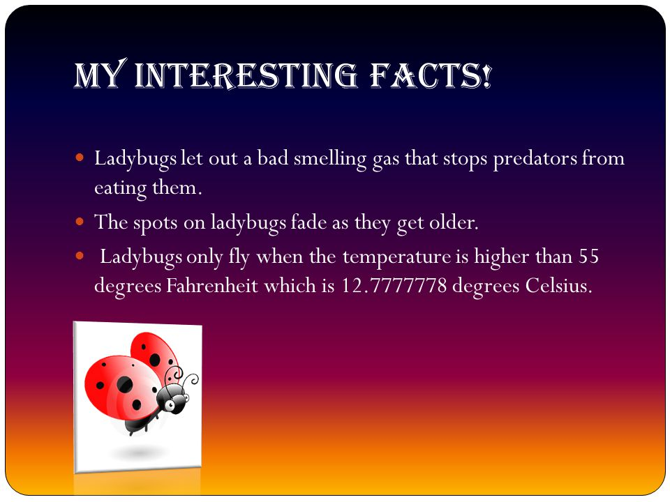 MY INTERESTING FACTS! Ladybugs let out a bad smelling gas that stops predators from eating them. The spots on ladybugs fade as they get older.