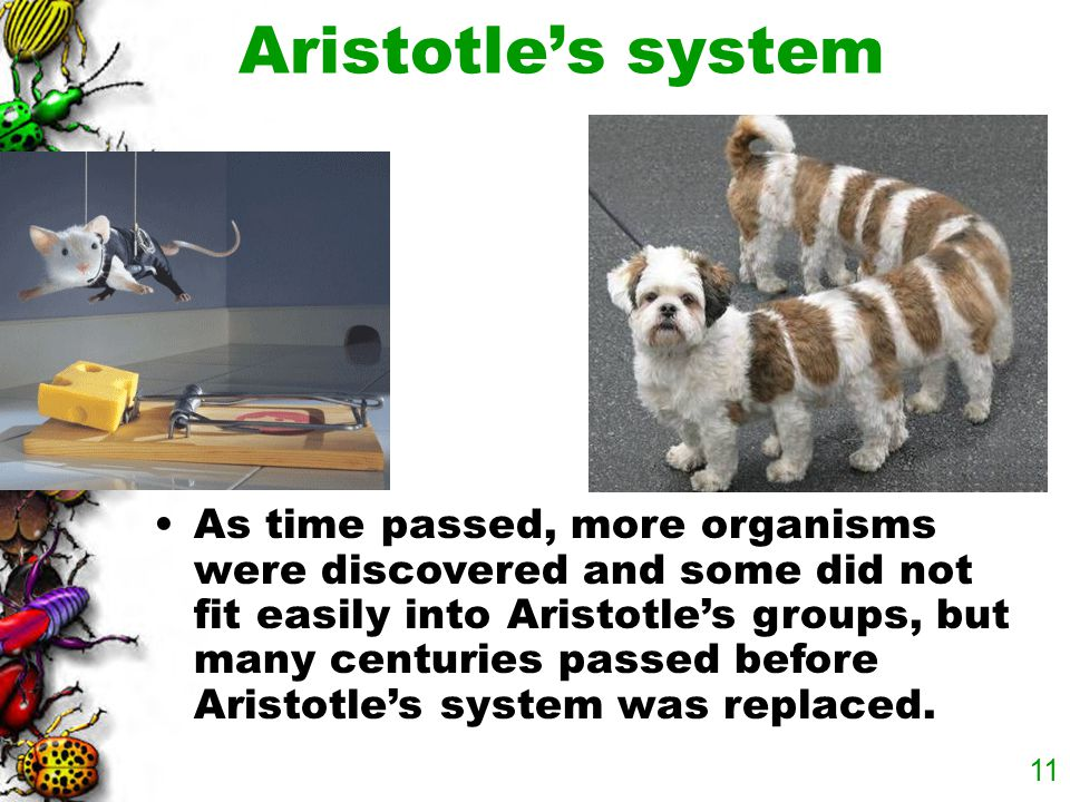 Aristotle's system