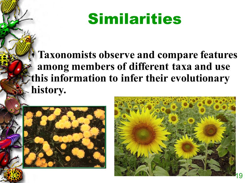 Similarities Taxonomists observe and compare features among members of different taxa and use this information to infer their evolutionary history.